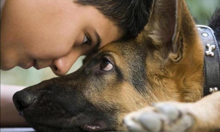 Ученые узнали, собаки каких пород более полезны для здоровья иххозяев