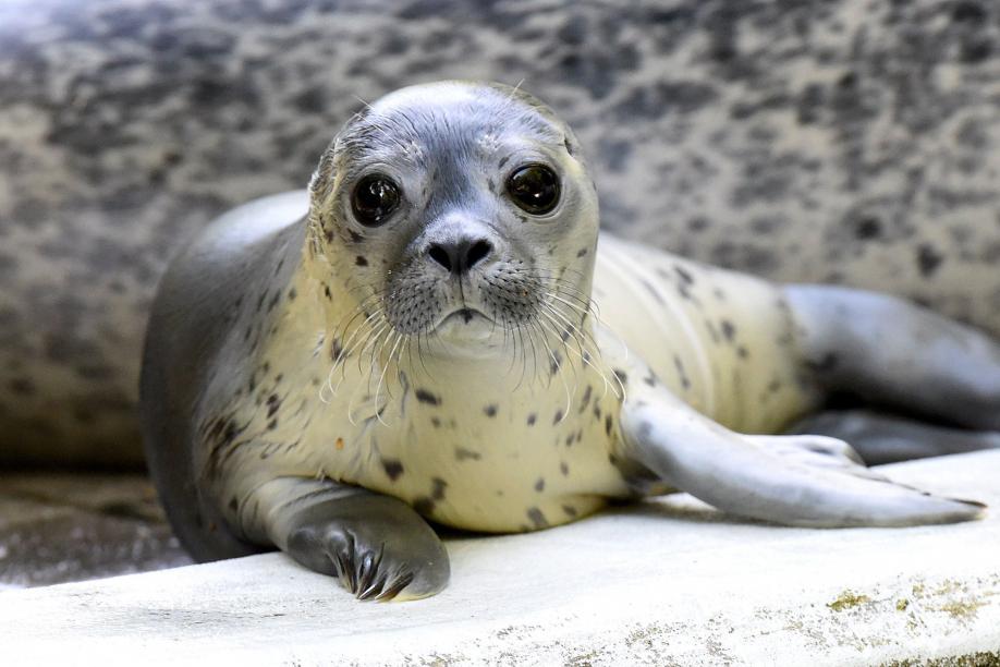 Зоопарки иокеанариумы соревнуются зазвание самого милого обитателя