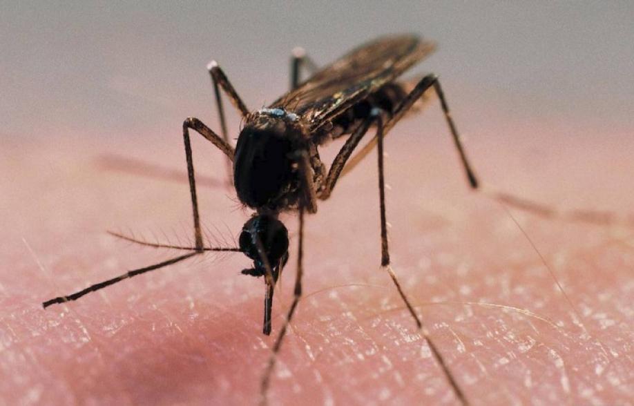 Ученые узнали, чего вдействительности опасаются комары