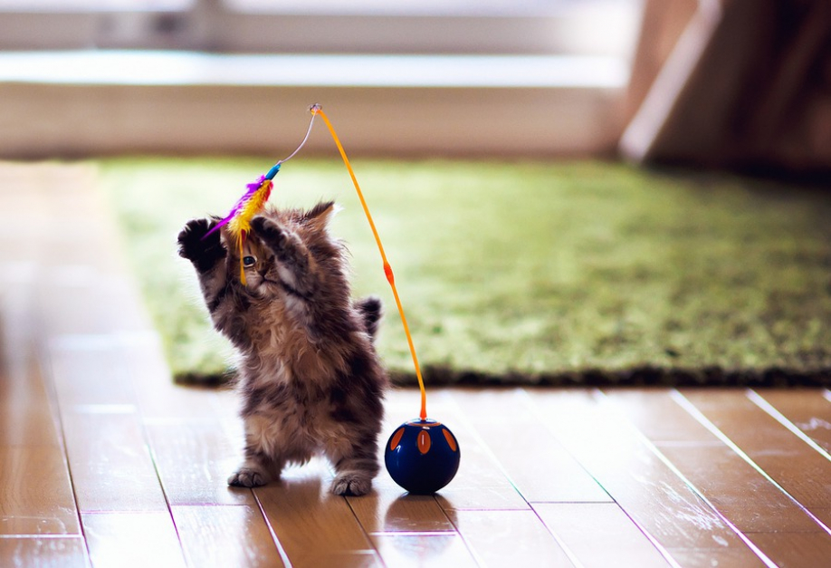 Коты владеют целительными свойствами— Ученые